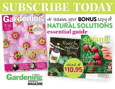 SUBSCRIBE AND RECEIVE A BONUS COPY OF NATURAL SOLUTIONS!