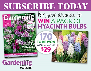 SUBSCRIBE FOR YOUR CHANCE TO WIN A PACK OF HYACINTH BULBS!