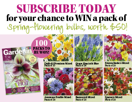 SUBSCRIBE NOW FOR A CHANCE TO WIN A PACK OF SPRING-FLOWERING BULBS!