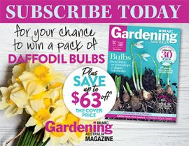 SUBSCRIBE FOR YOUR CHANCE TO WIN 1 OF 170 PACKS OF DAFFODIL BULBS!